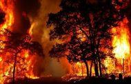 حرائق غابات أستراليا تتحول لكارثة بيئية وتخرج عن السيطرة
