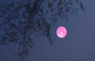 البحوث الفلكية يعلن عن ظهور أجمل قمر عملاق في عام 2020 مساء اليوم