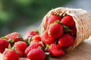 أهم فوائد الفراولة للرجيم