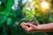 نصائح للحفاظ على البيئة .. تعرف عليها