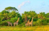 أشهر الأماكن السياحية في تنزانيا .. تعرفي عليها